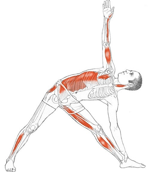 yoga anatomy Hip openers are among the most satisfying and powerful yoga poses they hold a tremendous potential for transformation they can help us release deep-seated tension and trauma of the past, which many of us hold locked in the hip area.